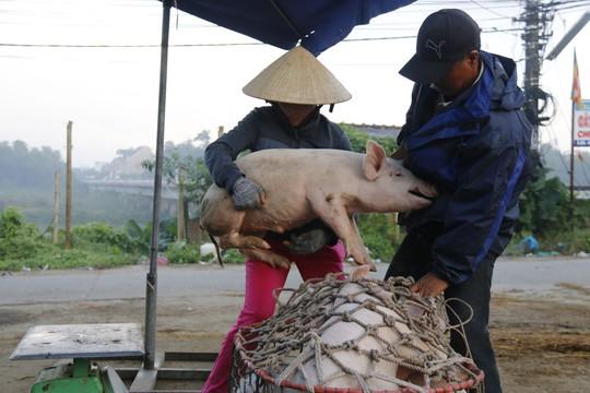 Nghề độc ở chợ heo lớn nhất Quảng Nam - Ảnh 22.