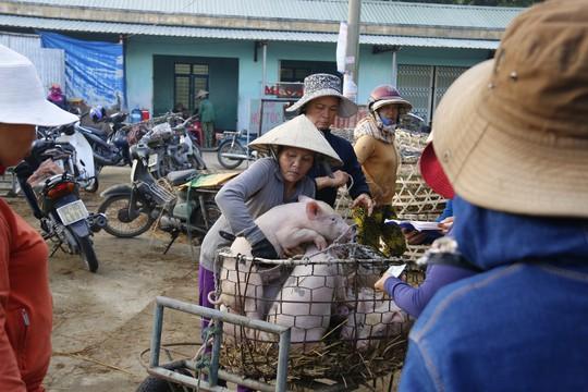 Nghề độc ở chợ heo lớn nhất Quảng Nam - Ảnh 13.