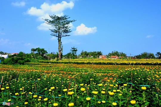 Ngắm làng hoa Tết lớn nhất miền Trung - Ảnh 1.