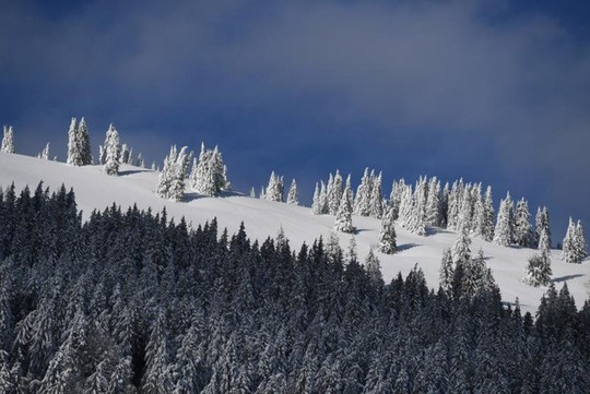 Những khung cảnh mùa đông tuyết phủ trắng xóa đẹp như cổ tích - Ảnh 12.