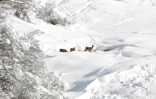 Những khung cảnh mùa đông tuyết phủ trắng xóa đẹp như cổ tích - Ảnh 16.
