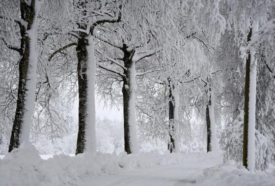 Những khung cảnh mùa đông tuyết phủ trắng xóa đẹp như cổ tích - Ảnh 17.