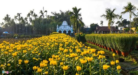 Ngắm làng hoa Tết lớn nhất miền Trung - Ảnh 3.