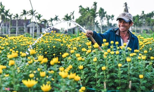 Ngắm làng hoa Tết lớn nhất miền Trung - Ảnh 4.