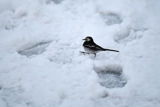 Những khung cảnh mùa đông tuyết phủ trắng xóa đẹp như cổ tích - Ảnh 5.