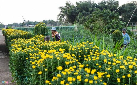 Ngắm làng hoa Tết lớn nhất miền Trung - Ảnh 6.