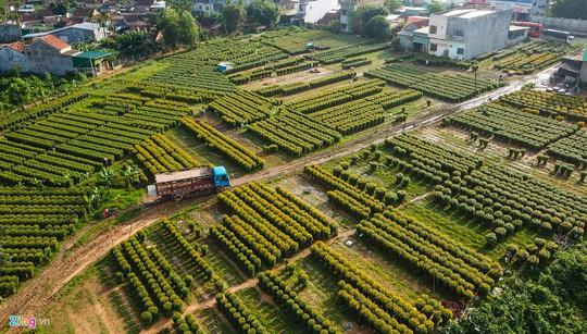 Ngắm làng hoa Tết lớn nhất miền Trung - Ảnh 9.