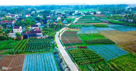 Ngắm làng hoa Tết lớn nhất miền Trung - Ảnh 10.