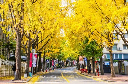 Rung đùi và 9 điều cấm kỵ ở Hàn Quốc - Ảnh 6.