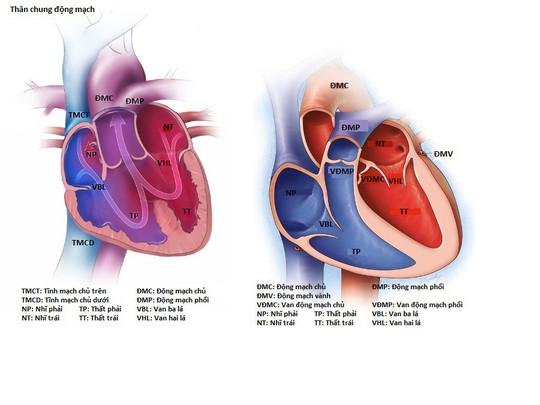 Vinmec Central Park: Thêm một em bé bị bệnh tim phức tạp được tái sinh bằng kỹ thuật mổ tim không đau - Ảnh 2.
