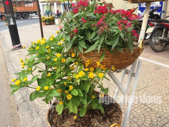 Độc đáo những tuyến đường đầy hoa ở đất Sen hồng Đồng Tháp - Ảnh 5.
