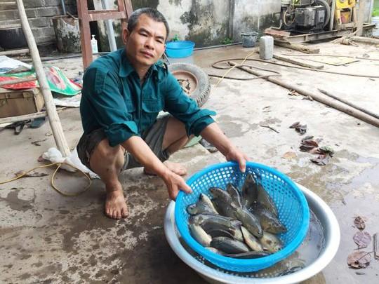 """Đút túi 200 triệu đồng/năm dễ như trở bàn tay nhờ cá rô """"tiến Vua"""" - Ảnh 6."""