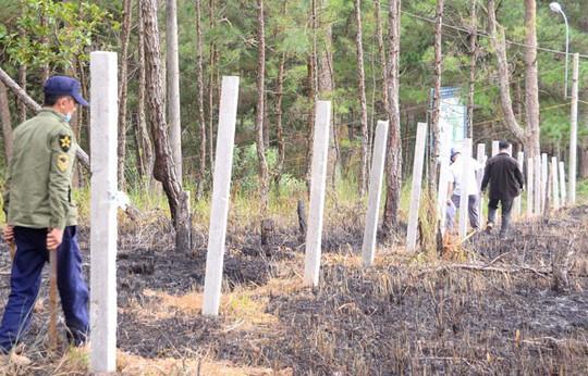 Xà xẻo đất rừng - Ảnh 2.