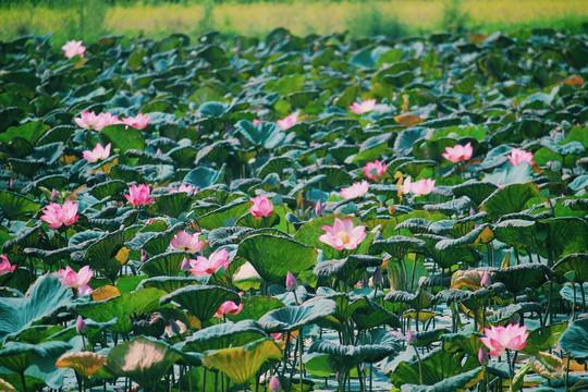 Đập Đồng Cam - báu vật của xứ hoa vàng trên cỏ xanh - Ảnh 8.