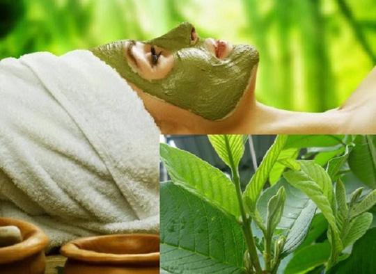 Chăm sóc và làm đẹp da với lá cây - Ảnh 2.