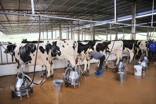 """Vị thế của """"ông lớn"""" ngành sữa Việt - Ảnh 1."""