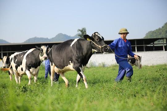 """Vị thế của """"ông lớn"""" ngành sữa Việt - Ảnh 2."""