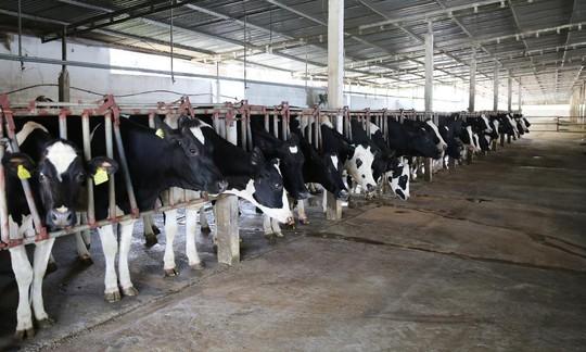 """Vị thế của """"ông lớn"""" ngành sữa Việt - Ảnh 3."""