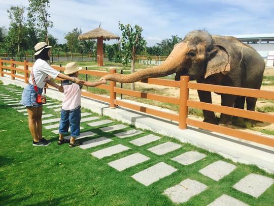 Khám phá FLC Zoo Safari Park – vườn thú độc đáo tại Quy Nhơn - Ảnh 4.