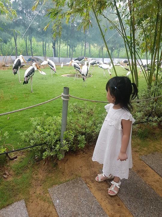 Khám phá FLC Zoo Safari Park – vườn thú độc đáo tại Quy Nhơn - Ảnh 5.