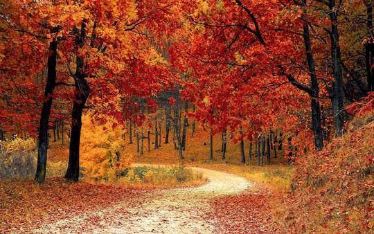 6 lý do để ít nhất một lần đón mùa thu ở Hàn Quốc - Ảnh 1.