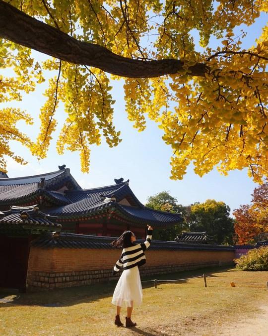 6 lý do để ít nhất một lần đón mùa thu ở Hàn Quốc - Ảnh 6.