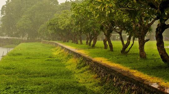 Khoảnh khắc mưa lãng mạn ở Huế - Ảnh 10.