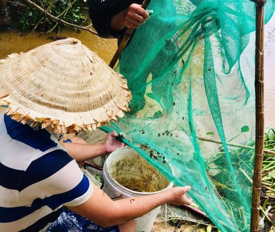 Hàng đàn cá nâu, cá hồng bé đang bơi đầy cửa biển Thuận An - Ảnh 1.