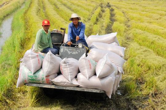 Nghịch lý gạo Việt: Ngon nhất thế giới nhưng bán giá bèo - Ảnh 1.