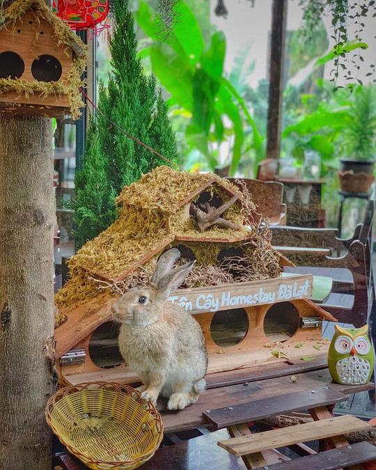 Những quán cà phê phong cách Đà Lạt ở Sài thành - Ảnh 16.