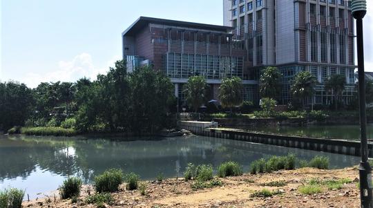 Đà Nẵng lên tiếng vụ nước thải đen ngòm đầu độc sông Hàn - Ảnh 3.