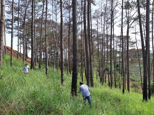 Hai Phó bí thư Tỉnh ủy ra tay dẹp nạn phá rừng thông ven đường Hồ Chí Minh - Ảnh 1.