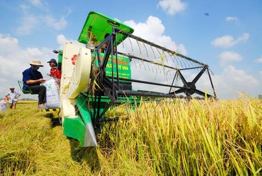 Phải sớm có thương hiệu nông sản Việt - Ảnh 1.
