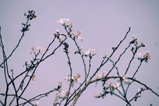 Đến Đà Lạt ngắm những bông hoa tuyết trắng - Ảnh 4.