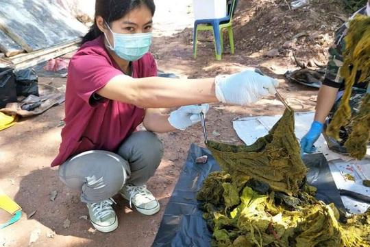 Mổ xác nai già, thấy 7 kg rác nhựa và... đồ lót - Ảnh 1.