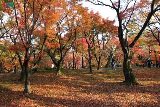 Tới ngôi chùa ngắm lá đỏ đẹp nhất Kyoto - Ảnh 2.