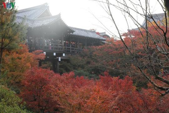 Tới ngôi chùa ngắm lá đỏ đẹp nhất Kyoto - Ảnh 6.