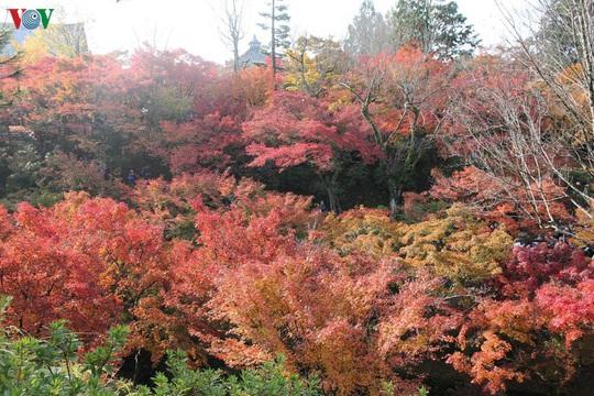 Tới ngôi chùa ngắm lá đỏ đẹp nhất Kyoto - Ảnh 8.