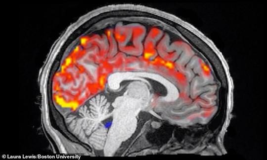 Cách sung sướng' giúp loại bỏ chất độc gây bệnh nan y trong não - Ảnh 2.