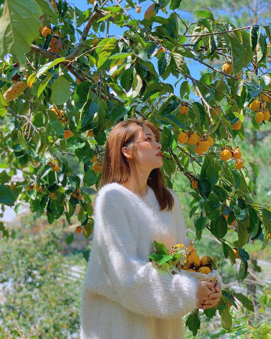 Vườn hồng Đà Lạt vào mùa chín đỏ hút giới trẻ - Ảnh 2.