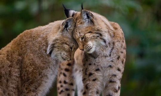 Khoảnh khắc dịu dàng hiếm có của động vật - Ảnh 1.