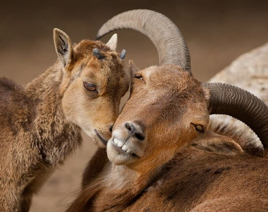 Khoảnh khắc dịu dàng hiếm có của động vật - Ảnh 2.