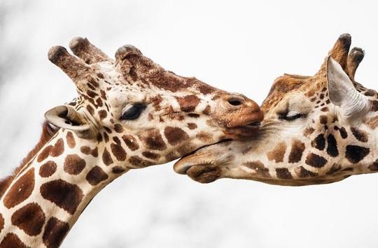 Khoảnh khắc dịu dàng hiếm có của động vật - Ảnh 3.