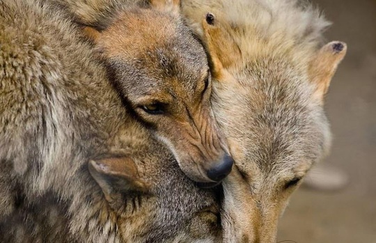 Khoảnh khắc dịu dàng hiếm có của động vật - Ảnh 4.