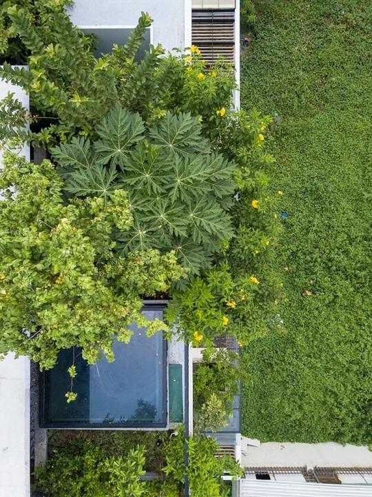 Nhà trổ 10 mảnh vườn lơ lửng - Ảnh 4.