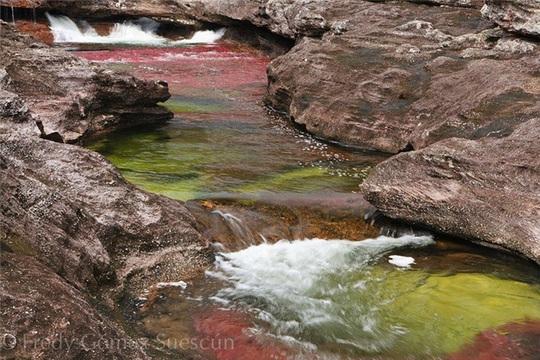 """Kỳ thú """"dòng sông ngũ sắc"""" tựa thiên đường - Ảnh 3."""