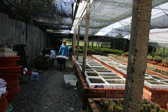 Ngắm khu vườn có hơn 1.000 chủng loại xương rồng độc, lạ chuẩn bị đón Tết - Ảnh 3.