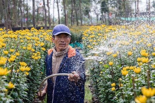 Khung cảnh rực rỡ ở làng hoa chong đèn chuẩn bị vụ hoa Tết - Ảnh 11.