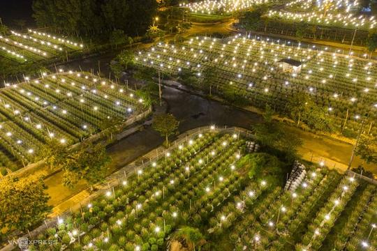 Khung cảnh rực rỡ ở làng hoa chong đèn chuẩn bị vụ hoa Tết - Ảnh 2.