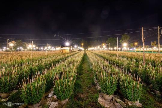 Khung cảnh rực rỡ ở làng hoa chong đèn chuẩn bị vụ hoa Tết - Ảnh 3.